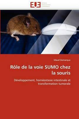 Role de la Voie Sumo Chez La Souris