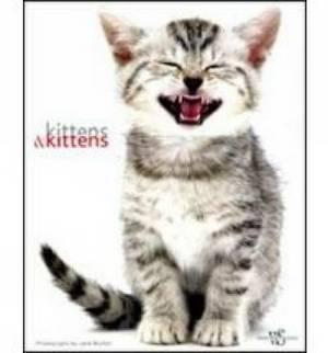 Kittens & Kittens