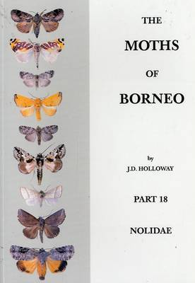 The Moths of Borneo: Nolidae