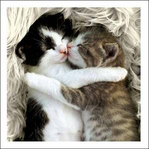 Woodmansterne Snuggle Up Cats Card (365492)