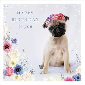 Woodmansterne Happy Birthday Cute Pug Card (411267)