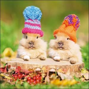 Woodmansterne Peekaboo Bunnies Card (429385)